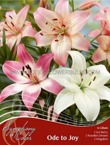 SYMPHONY OF COLORS PKGS. LILIUM MIX 'ODE TO JOY' 12/14 CM. (25 PKGS. X 6)