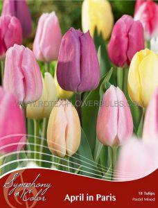 SYMPHONY OF COLORS PKGS. TULIPA 'APRIL IN PARIS' 12/+ CM. (25 PKGS.X 18)