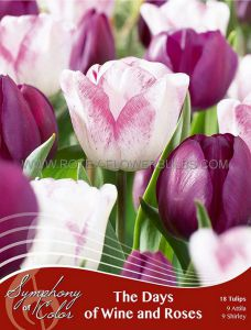 SYMPHONY OF COLORS PKGS. TULIPA 'DAYS OF WINE AND ROSES' 12/+ CM. (25 PKGS.X 18)