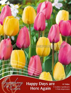 SYMPHONY OF COLORS PKGS. TULIPA 'HAPPY DAYS ARE HERE AGAIN' 12/+ CM. (25 PKGS.X 18)