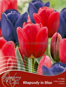 SYMPHONY OF COLORS PKGS. TULIPA 'RHAPSODY IN BLUE' 12/+ CM. (25 PKGS.X 18)