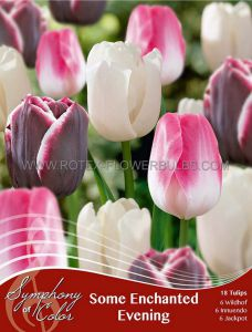 SYMPHONY OF COLORS PKGS. TULIPA 'SOME ENCHANTED EVENING' 12/+ CM. (25 PKGS.X 18)
