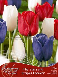 SYMPHONY OF COLORS PKGS. TULIPA 'STARS AND STRIPES FOREVER' 12/+ CM. (25 PKGS.X 18)