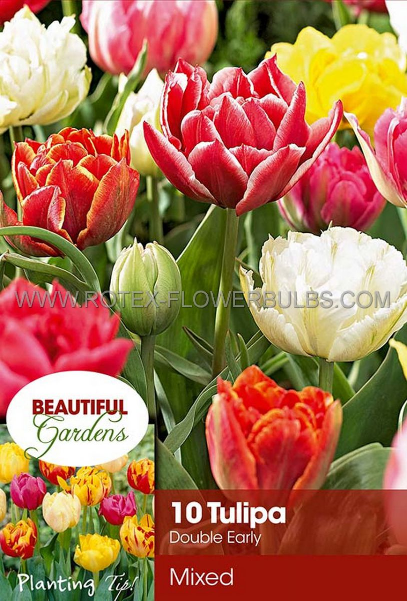 tulipa double early mix 12 cm 10 pkgsx 10