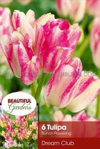 TULIPA MULTIFLOWERING 'DREAM CLUB' 12/+ CM. (10 PKGS.X 6)