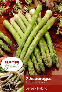 VEGETABLE ASPARAGUS ROOTS 'JERSEY HYBRID' 2 YEAR (15 PKGS.X 7)