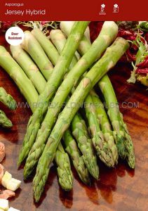 VEGETABLE ASPARAGUS ROOTS 'JERSEY HYBRID' ROW RUN (100 P.OPEN TOP BOX)