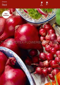 VEGETABLE ONION SETS 'RED' 14/21 MM (10 PKGS.X 75)