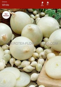 VEGETABLE ONION SETS 'WHITE' 14/21 MM (10 PKGS.X 75)