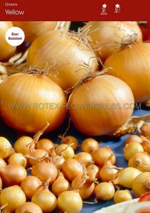VEGETABLE ONION SETS 'YELLOW' 14/21 MM (10 PKGS.X 75)