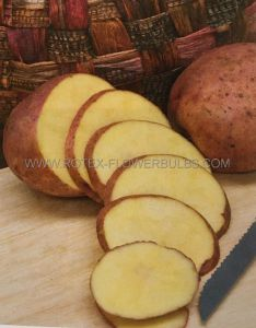 VEGETABLE SEED POTATOES GOURMET 'RED GOLD' (10 PKGS.X 1 LBS)