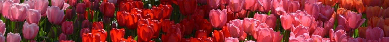 Verschillende kleuren bloemen